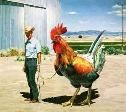 gallo gigante